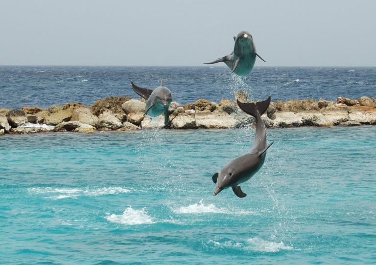 Curacao Dolphin Show